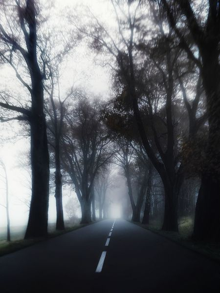 Road The Way Forward Tree Outdoors Travel Destinations No People Landscape Day Nature Sky Polska Poland Warmia Mazury Fog Mgla EyeEmNewHere