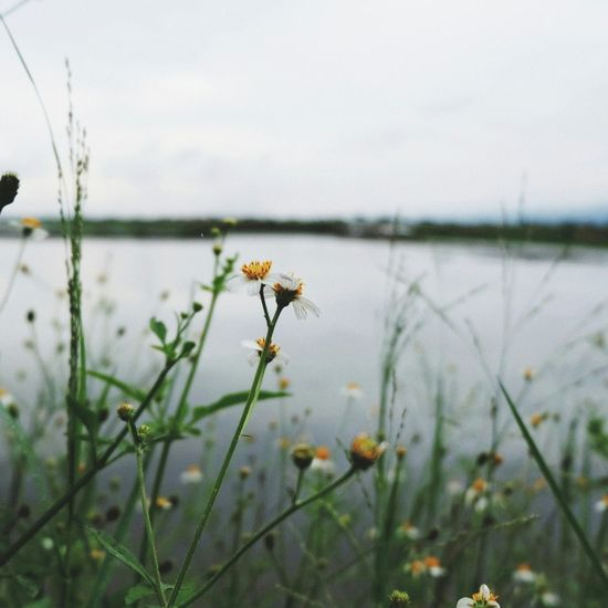 Wildflowers. Nature Outdoors Flower Lake Beauty In Nature EyeEm Selects