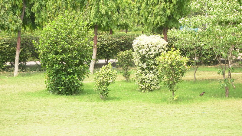 Beautiful Park with nature equipments Myna Scenics Sunlight White Beautiful Nature Beautiful Trees Green Nature Sky Scene Botanical Garden Plants Beautiful View Natural Landscape Children Park Playground EyeEm Best Shots EyeEm Nature Lover EyeEmNewHere EyeEm Gallery Greenery Tree Playing Field Field Grass Grassland Domestic Garden Woods