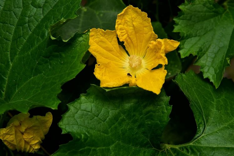 Leaf Yellow Nature Flower Animal Wildlife Aerial View Beauty In Nature Science Outdoors No People Day Close-up Fragility Planet Earth Flower Head Freshness