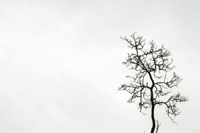 Bare Tree Beauty In Nature Branch Clear Sky Day Isolated Lone Nature No People Outdoors Sky Tranquility Tree Tree Trunk