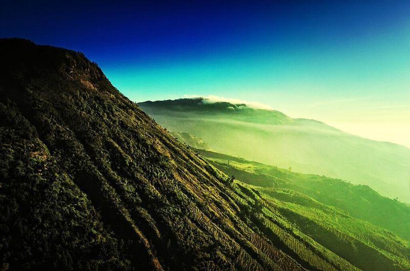INDONESIA Step Farming Green Morning