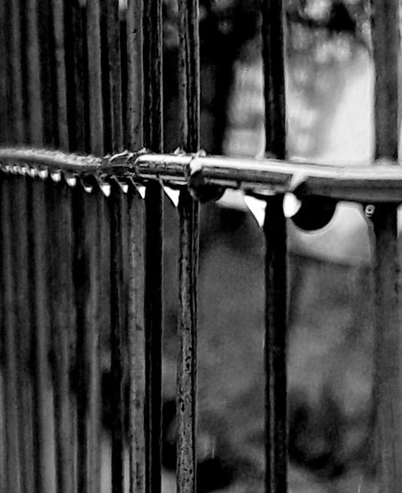 Fence, Water Drops Black And White Outdoors. Day. No Purple