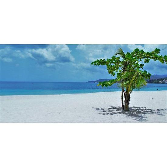 Missing this today 🌞🌴🌊🐚💯 GrandAnseBeach Grenada Paradise Nikon Nikontop Carribean Beach Tropical