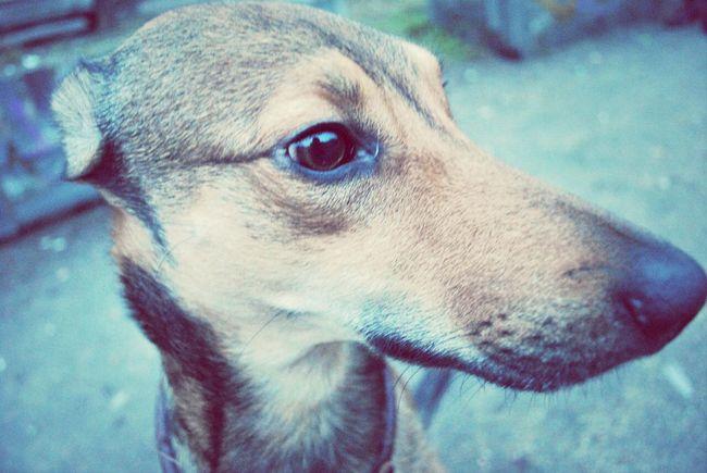 Dog I Love My Dog Forever