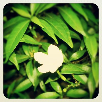 Nature Green White Night Instagram Instaeffects Updaily Love Android Sony XPERIA
