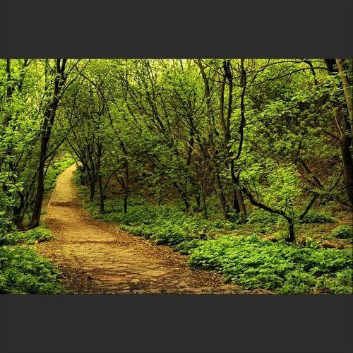 Киев украина Дорога дорожка зелень деревья земля природа листья весна серияHDR хдр Kiev Ukraine road nature green spring hdr