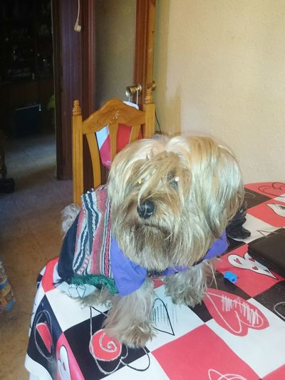 Mi perrito antes de ir al dia de San Anton patron de los animales Zaragoza Casco Viejo Zaragoza San Pablo