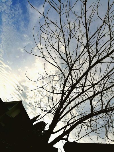 Low angle view of silhouette bird on tree against sky