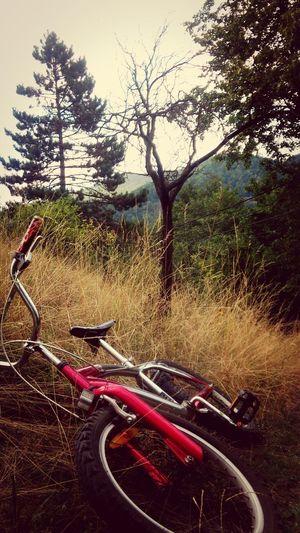 Bicycle Relaxing Enjoying Nature Life It's Beautiful