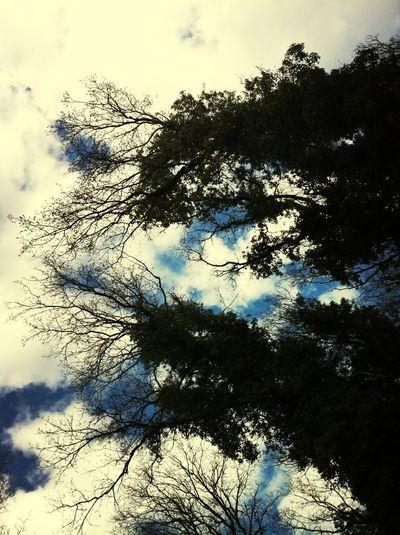Treetastic