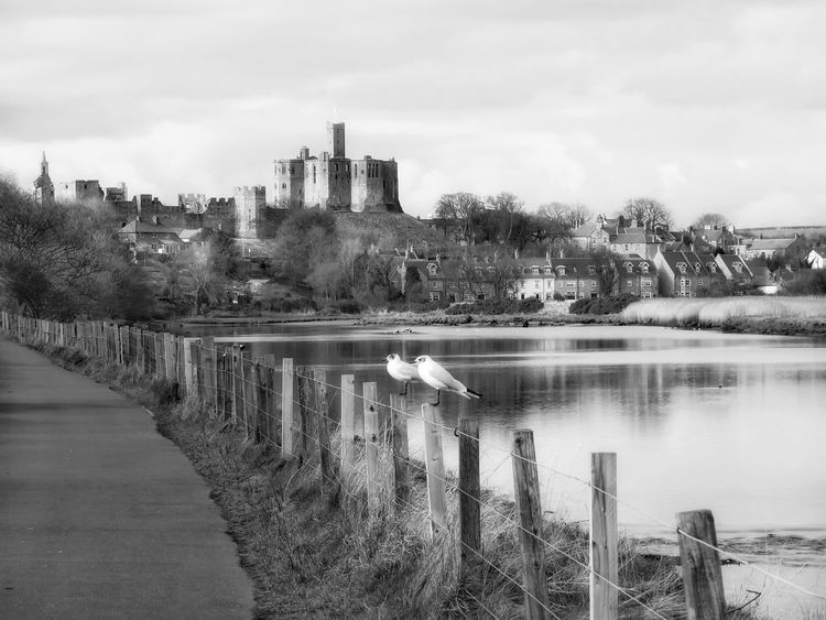 Water Built Structure Architecture Sky Countryside Skyporn Landscape_Collection Eye4photography  Castle Blackandwhite Black And White Black & White Blackandwhite Photography Seagulls Seagull Birds From My Point Of View River Trees WarkworthCastle Tranquility