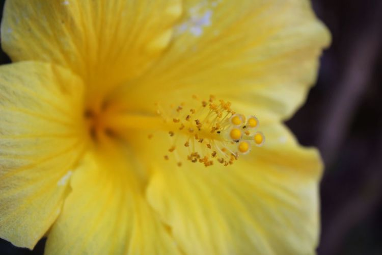 Hibiscus Flowers Nature Yellow Nature_collection EyeEm Nature Lover EyeEm