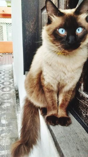 Cats Of EyeEm Pets Domestic Animals Domestic Cat Cat Feline Animal Gatos Gatinho Olhao Love Loveanimals Anjos Amorpuro