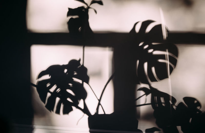 Close-up of silhouette toy on window