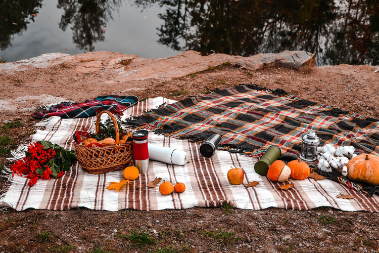 Autumn picnic with thermos and pumpkins, cotton branch, croissants. concept of warm sunny autumn day