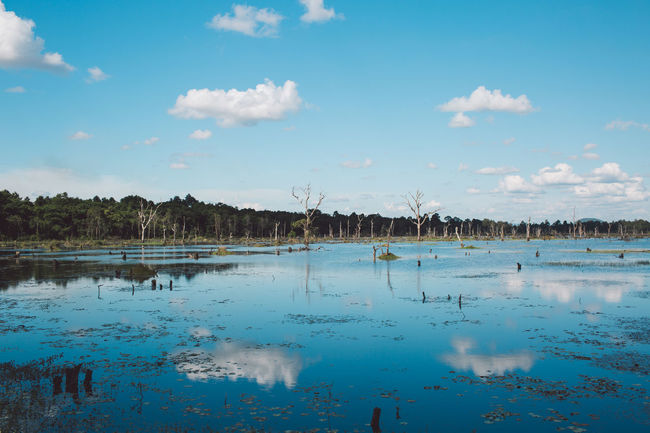 Siem Reap Cambodia Angkor Water Sky Cloud - Sky Scenics - Nature Reflection Tranquility Tranquil Scene Beauty In Nature Nature No People Blue Lake Day Waterfront Plant Tree Non-urban Scene Outdoors Idyllic