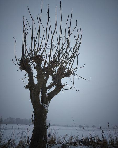 Trees TreePorn EyeEm Nature Lover EyeEm Best Shots The Week Of Eyeem Iphonephotography Iphonephotographyschool EyeEm Best Shots - Nature Silhouette Winter Black & White IPhone It's Cold Outside Showcase: January
