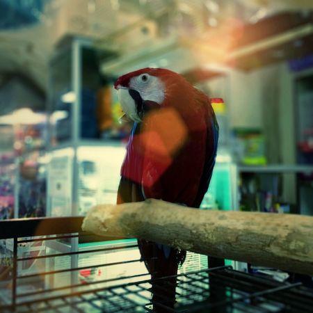 Tadaa Community Mix4Ins Parrot Afterfocus Mixstorm