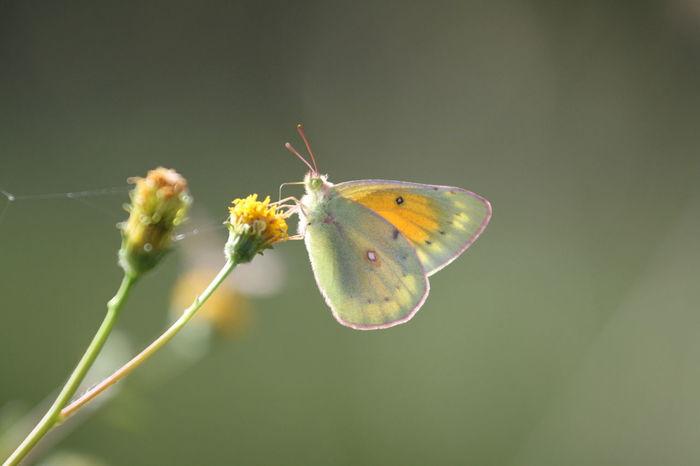 Papillon Beatiful Bichos Color Colors Jardin Mariposa Natural Papillon