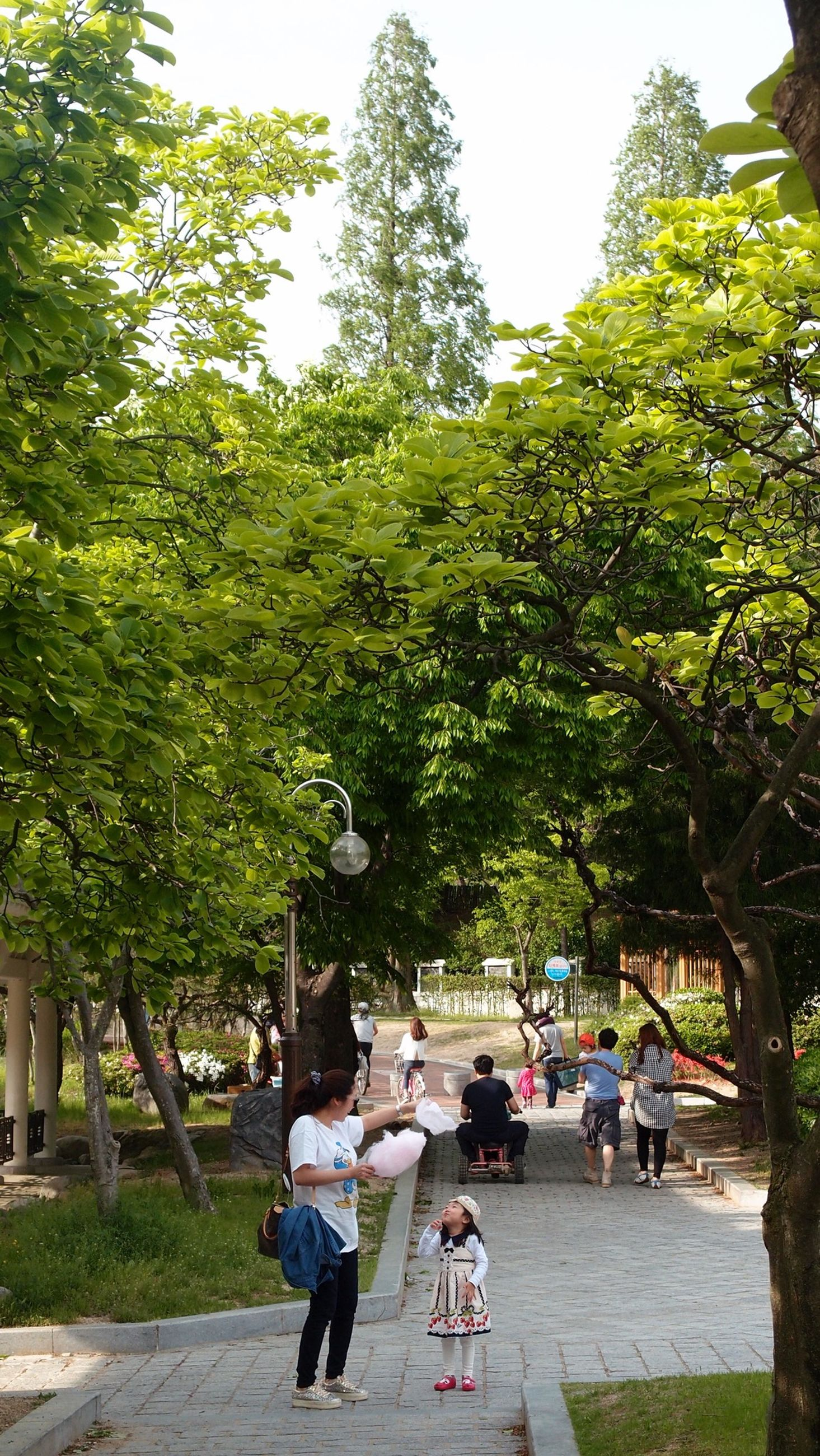 tree, lifestyles, men, person, leisure activity, walking, full length, rear view, casual clothing, togetherness, large group of people, green color, growth, day, sunlight, park - man made space, clear sky, outdoors