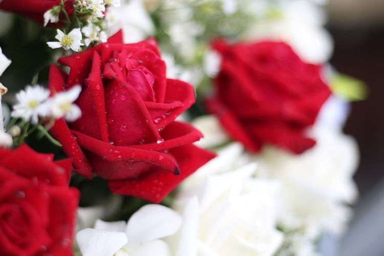 Flower Flowering Plant Red Beauty In Nature Plant Petal Freshness Fragility Vulnerability  Close-up Inflorescence Rosé Flower Head Rose - Flower Nature No People Selective Focus Day Growth White Color Bouquet Flower Arrangement Bunch Of Flowers White Flower Whit Rose