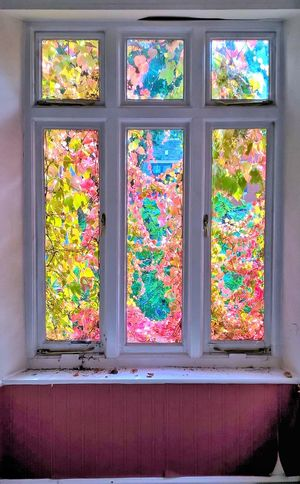 Almost Stained glass windows Architecture Boston Ivy Day Delapidated Haunted Haunted House Haunted Window Indoors  Ivy Ivy Covered Ivy House Ivy Leaves Ivy On Window Ivy On Windows Multi Colored No People Old Old Building  Old Buildings Old House Spooky Spooky House Vertical Virginia Creeper Window