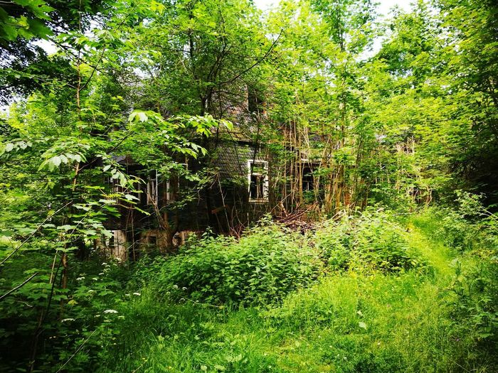 No People Grass Nature Horror Damaged Zerfall Tree Outdoors Old Ruin House Beauty In Nature Eingewachsen