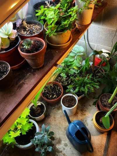 High angle view of potted plants on table