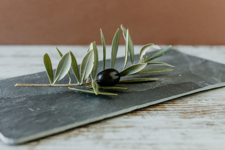 Olive Olive Tree Olives Olive Oil Branch Mediterranean  Freshness Food Background Wood - Material Stone Material Healthy Lifestyle Beauty In Nature Bio Plant Part Leaf Close-up Selective Focus No People Food And Drink Green Color Wellbeing Healthy Eating Black Color Nature Still Life Plant Table Indoors