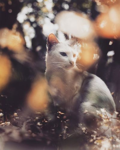 Catty Cats Cat Lovers Cats Of EyeEm Pet Pet Cat White Cat White Cat Outdoor White Cats Paw Cat EyeEm Selects Leopard Defocused Reptile Close-up Bird Of Prey UnderSea Perching Spread Wings Jellyfish Eagle Owl Bald Eagle Coral Sparrow Bird Robin Underwater Hawk Kingfisher Eagle - Bird