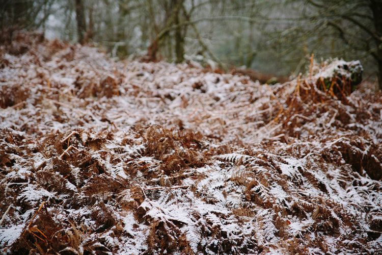 Close-up of snow on field in forest