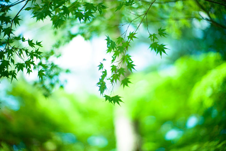 Low angle view of leaves against trees in forest