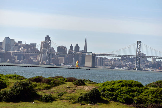 Sailboat @ Middle Harbor 1 San Francisco Skyline Bay Bridge San Francisco : Home Port Of Eros Urban Landscape Transamerica Pyramid Pyramid Building San Francisco's Port Ferry Building San Francisco Bay Port Of 0akland Sailboats Colorful Sails