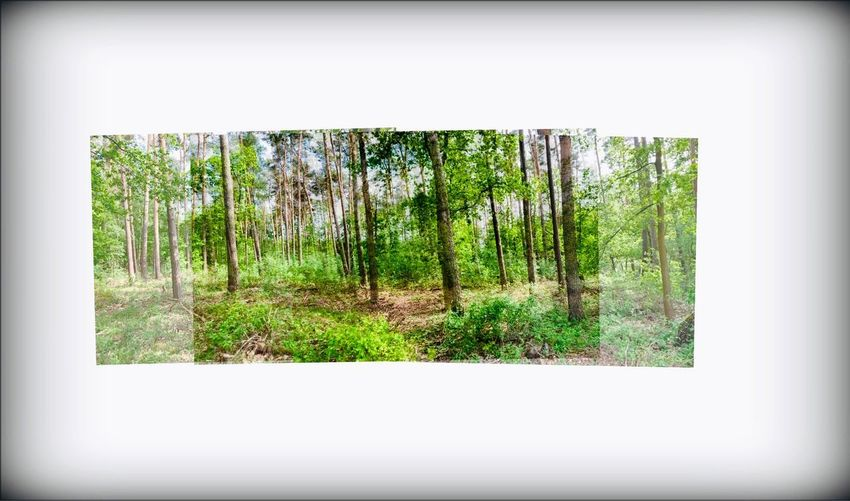 Bäume Waldspaziergang Wald Forest Plant Tree Nature Day No People Transfer Print Window Green Color Land Sunlight Outdoors