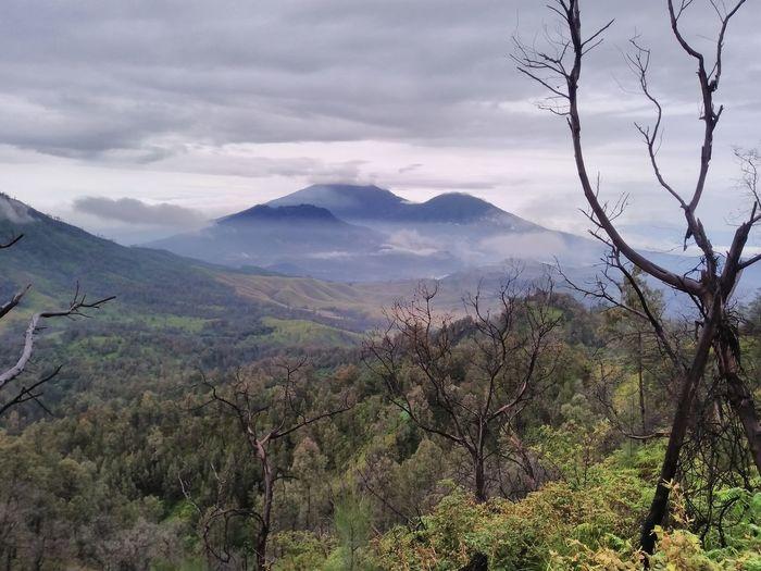 Mountain Cloud - Sky Fog Hiking Outdoors Tree Landscape