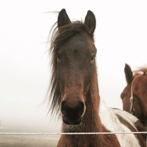 Outdoors Beauty In Nature Fog Foggy Mist Tranquil Scene Horse Photography  Nature Landscape Clear Sky Domestic Animals Animal Themes Working Animal One Animal