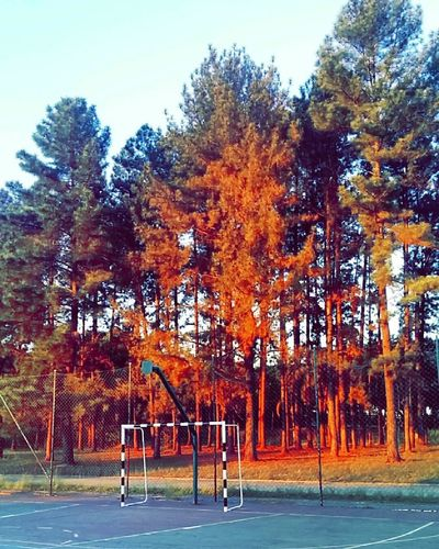 Tree Park - Man Made Space Orange Color Outdoors Sky Day Growth Sport Nature No People