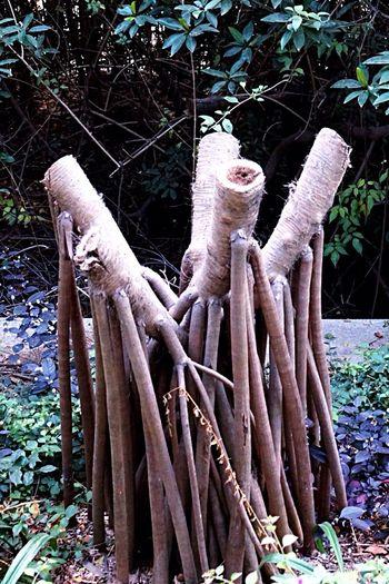 Everyday Lives Island Haynan EyeEm Nature Lover Love Nature Roots Tree Roots  Beautiful Nature My Island Today's Photos Bay Sanya