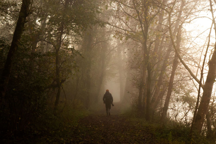Rear view of man walking in forest during foggy weather
