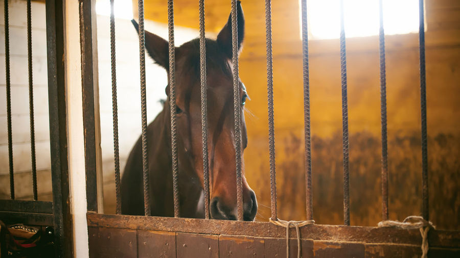 Portrait of horse in stable