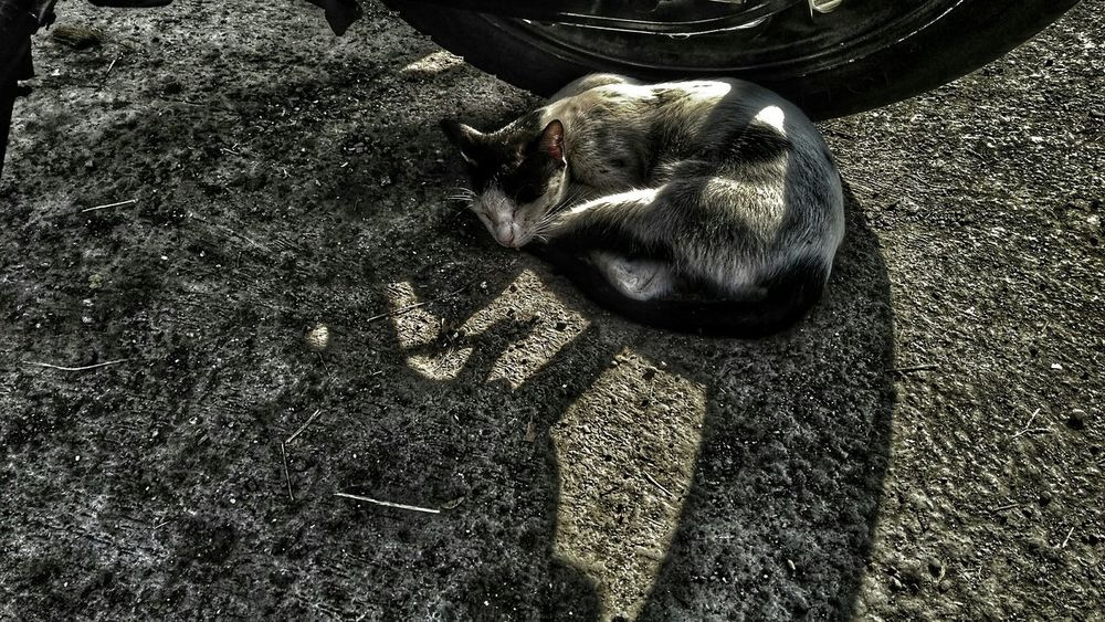 Cat in cold highlights cat streetphotography cats cat lovers cats of eyeem catsagram catoftheday catlovers cat♡ cats 🐱