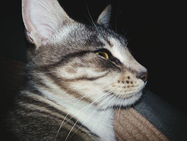 Portland Oregon Usa Cat Close Up