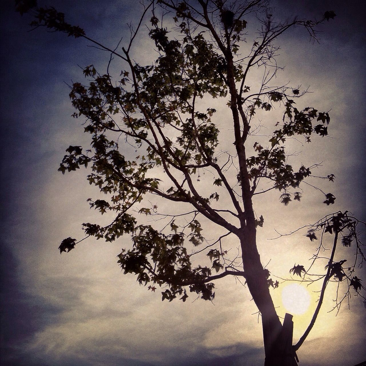 tree, sky, branch, low angle view, nature, silhouette, beauty in nature, tranquility, growth, cloud - sky, outdoors, scenics, no people, day
