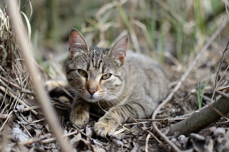 Close-up portrait of a cat on field