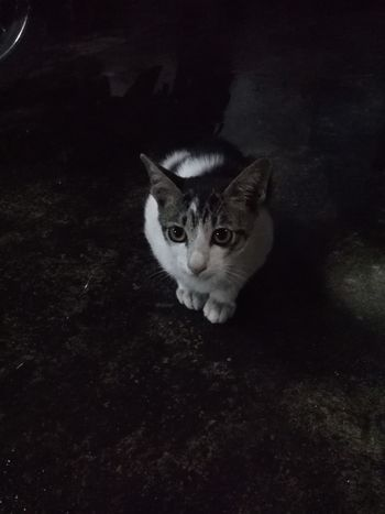 In dark night Cats Of EyeEm Catcat Lonely Cat Meaw Meaw Taking Photos