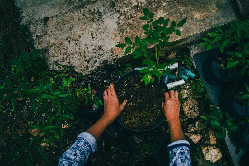 Cropped hand of man gardening at yard
