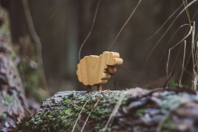 Lamb Toy Toys Wood Wood - Material Forest Nature Wooden Toys Autumn Summer Winter Plant Selective Focus Tree Day Close-up Growth Fungus No People Moss Mushroom Rock - Object Solid Rock Outdoors Land Beauty In Nature Tree Trunk Trunk Toadstool