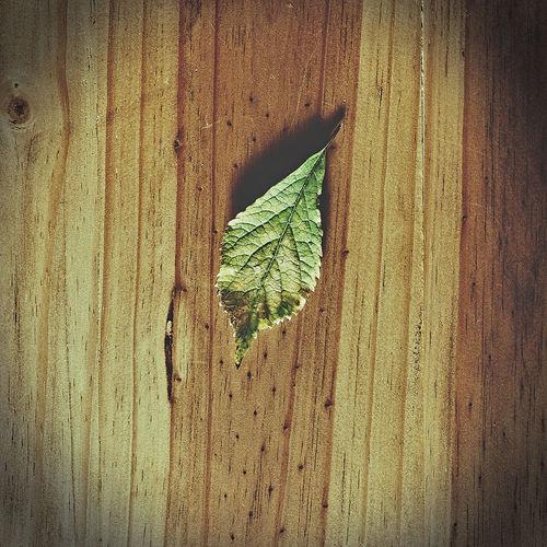 Leaf Wood -