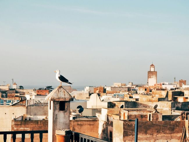Bird Animals In The Wild Perching Architecture Animal Themes Animal Wildlife One Animal Built Structure Sky No People Roof City Outdoors Building Exterior Day Nature Building Terrace Seagull Coastal Coastal Town Essaouira Essaouira Bay Cityscape Old Town Neighborhood Map Pet Portraits